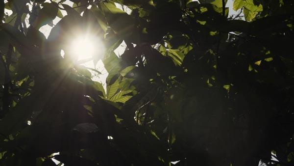 Baracoa. Cuba. Curva CanonLog3 BT2020. 3840x2160 160 Mbps VBR. YUV 4:2:2 10 bits. 25P fps. 180º.Focal 18,0mm T 5 1/3.ND 1/64 (ND 1.8) 6450 Kº. Ganancia 2.5 Db. Lut BT2020_CanonLog3-to-BT709_BT709_33_FF